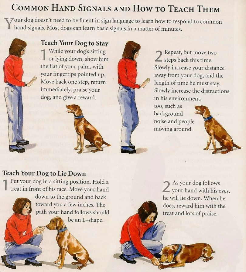How To Train Your Dogs To Speak